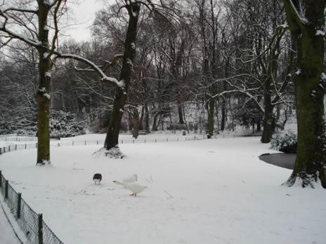 Schaerbeek Parc Neige 2