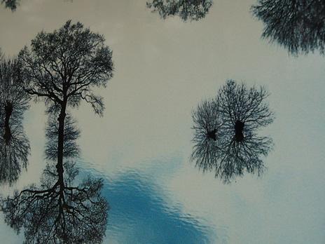 Schaerbeek arbres Rhône