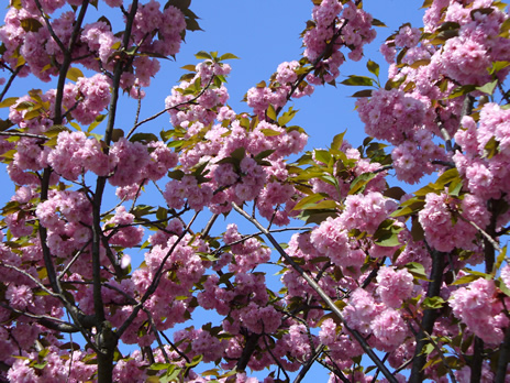 Schaerbeek en fleurs